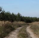 Un sentiero in mezzo alla natura