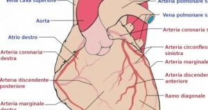 Le cellule staminali per i problemi post-infarto.