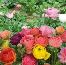 Photogallery il significato e la simbologia dei fiori for Fiori dalla a alla z