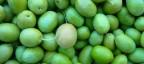 Vuoi raccogliere le olive di Sting? Paga 260 euro al giorno!