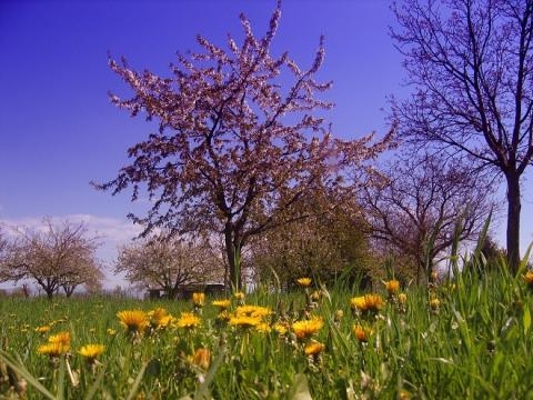 Primavera 2015 in arrivo cambio dell 39 ora date pasqua pasquetta e equinozio ecco quando - Dates des soldes janvier 2015 ...