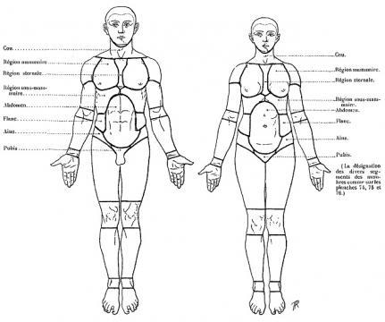 Endurance vs Musculation : Impact sur la sant chez des
