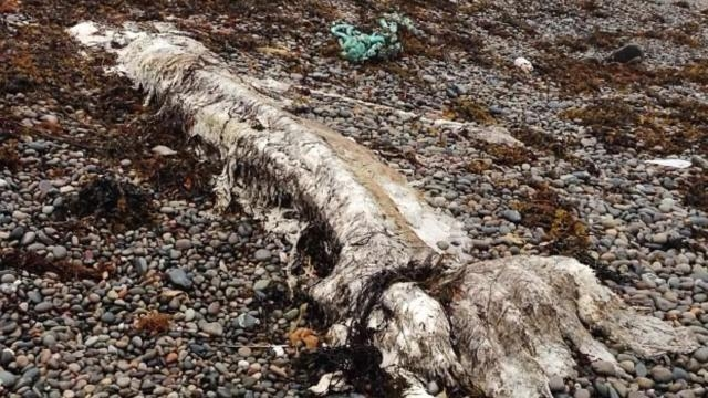 Three mysterious white carcasses are found on Scottish Isle. YouTube (Screencap-All About AMAZING)