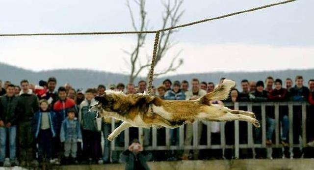 Bulgarian Dog Spinning