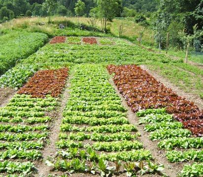 L 39 orto di marzo cosa piantare for Piantare piselli
