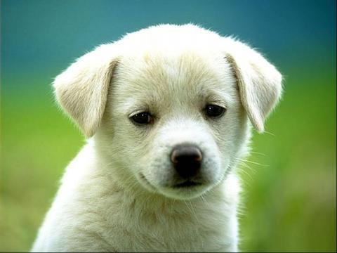 Lascia il cane in casa: maxi multa da 3000 euro, ecco perché – Blasting News