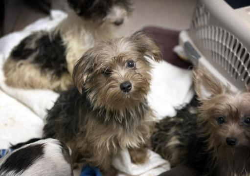 Dogs Available For Adoption San Diego