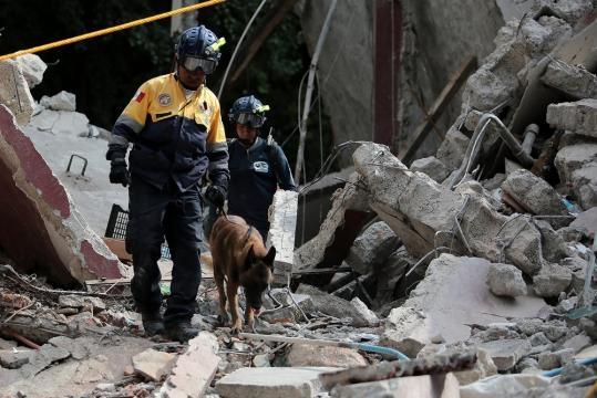Otros héroes y víctimas de cuatro patas del sismo. - Cuerpos de ... - vanityfair.mx