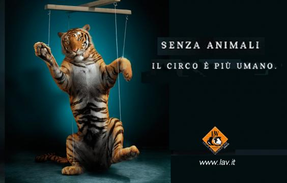 Manifestazione contro il Circo Medrano a Verona - - animalistiverona.org