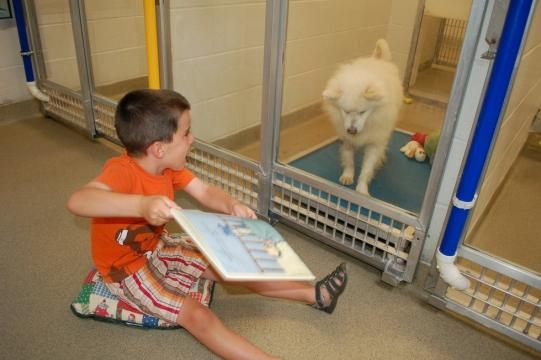 CAN I GET AN AMEN: Reading To Dogs – Sweet Animal Story Of The ... - cbslocal.com