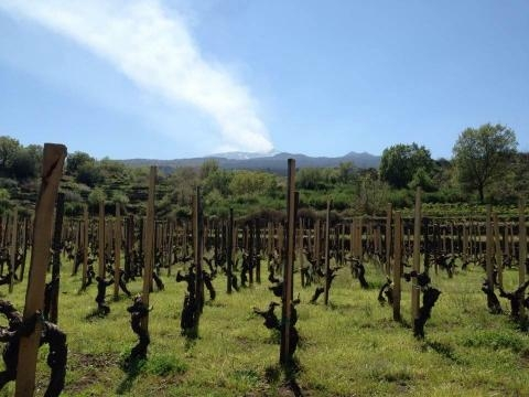 Benanti Vineyards, Mount Etna Sicily
