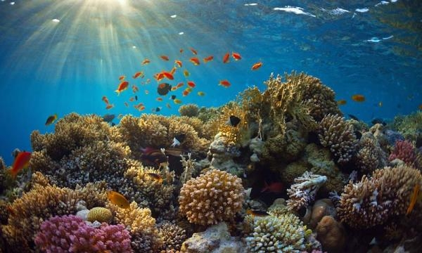 Drones, mapas y arrecifes | BLOG SMART DRONE - com.mx