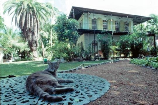 Cat outside Ernest Hemingway's Key West home [Image: Flickr by Florida Memory/Public Domain]