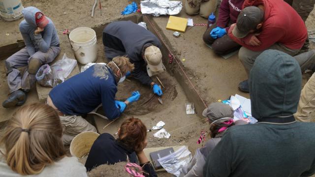 Excavations at the Upward Sun River archaeological site in Alaska [Image credit: Ben Potter]