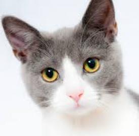 Catwack