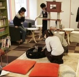 il primo neko café è nato in Cina, nel 1998