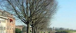 Ferrara, mura di Borso d'Este 01