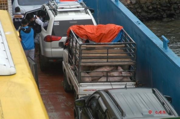 Les cochons aussi mais ils ne font pas de tourisme