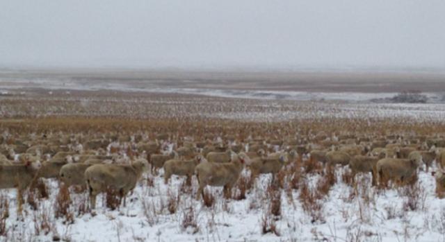 Es esta imagen las ovejas pueden percibirse mejor.