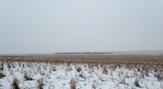 La ovejas escondidas en el paisaje.