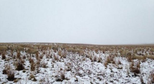 ¿Puedes percibir las ovejas en el paisaje?