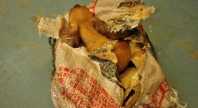 Los seis cachorros saliendo del interior del saco