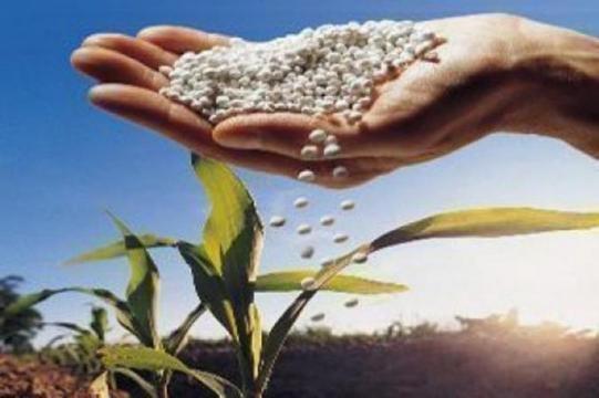 Adubar muito não é indicação de boa colheita