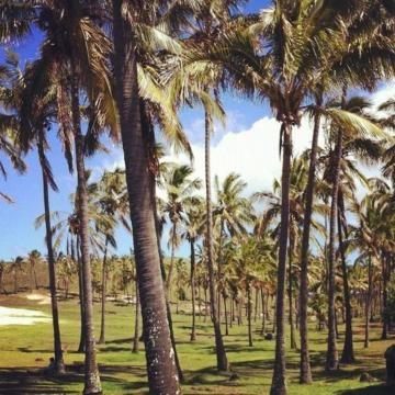 Ingreso a playa Anakena en Isla de Pascua