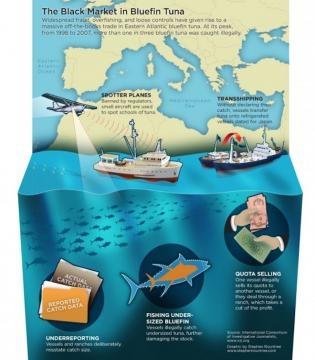 Mercado negro  - pesca com auxilio de aviões