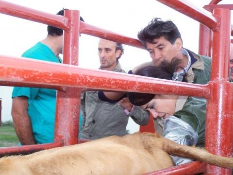 Inseminación artificial de ganado