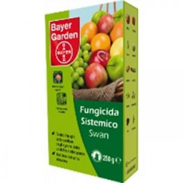 L amisura eccezionale per le piante del basilico