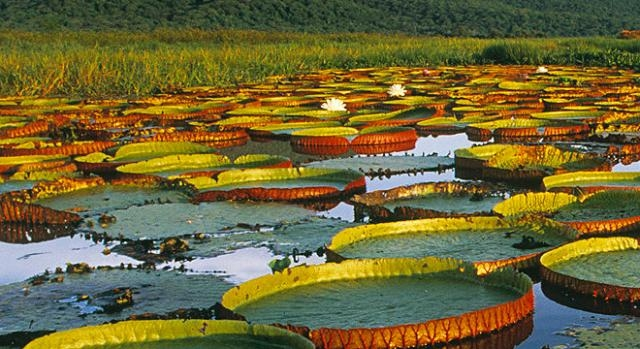 Biodiversidade do Pantanal poderá ser bem estudada