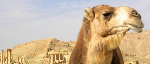 Le rovine archeologiche di Palmira