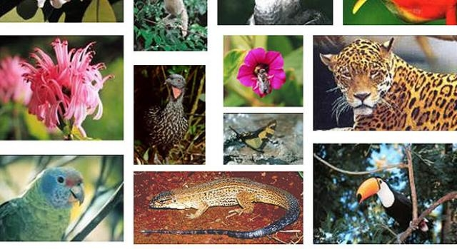 Lei da Biodiversidade é sancionada no Brasil