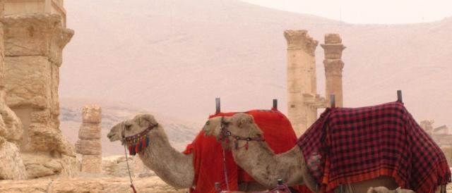 Palmira ora è sotto il controllo dei terroristi