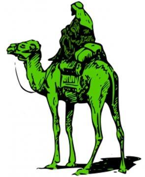 Il cammello sulla via della seta