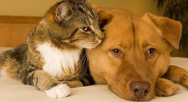 Cães e gatos são os preferidos dos humanos