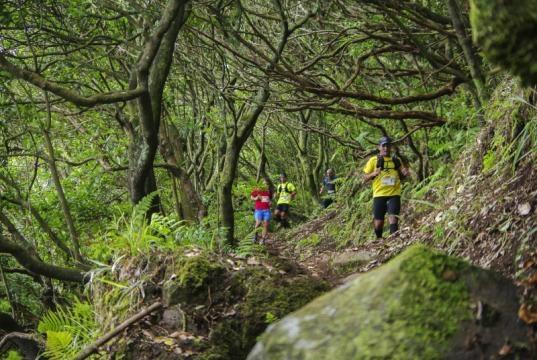 Corredores na floresta Laurissilva, Madeira