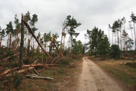 Niemało jest zadań w gospodarce leśnej