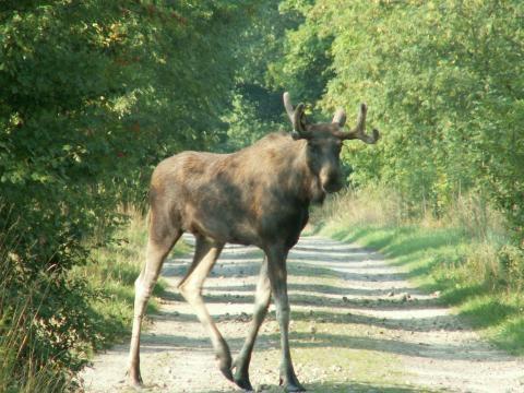 Zwierzyna leśna także wymaga troski i dbałości