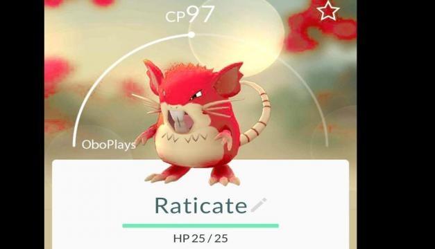 Raticate en versión shiny dentro de pokémon go.