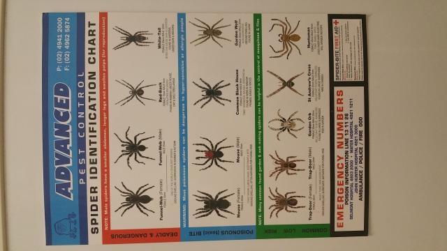 Poster d'information affichée sur le frigo de mon logement sur les différentes arraignées existantes