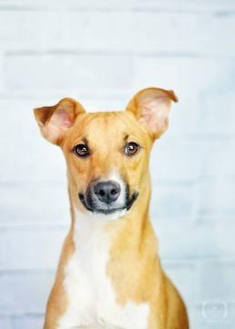 Ralf é um jovem e dócil cão, já castrado (Foto: Marcela Pena)