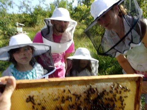 A la différence de ces enfants qui observent une ruche, le Ministre Le Foll n'a rien compris à l'abeilles, l'apiculture, la biodiversité, car sectaire