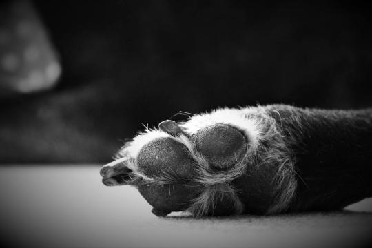 Krebs bei unseren Hunden auf dem Vormarsch