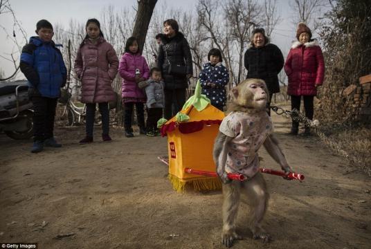 Macacos usados como sirvientes en la China