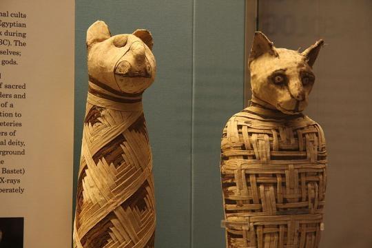 Gatos momificadosde Egipto en un museo