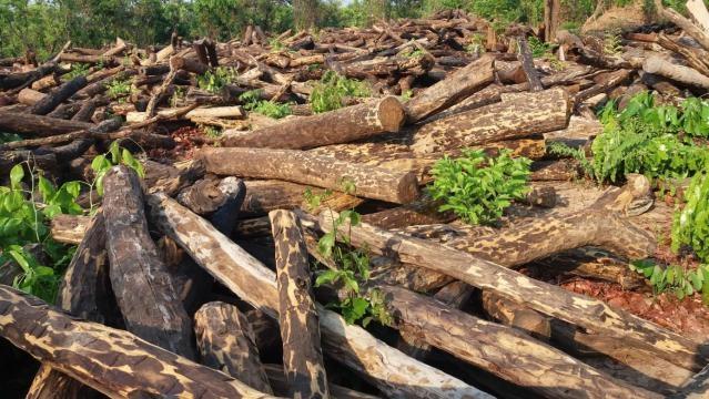 Illegal logging creates swathes of wasteland.