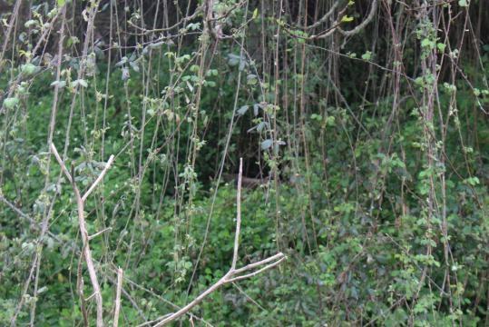 Ladrões terão furtado a tampa do poço de uma habitação inabitada, na vila de Ribeirão.