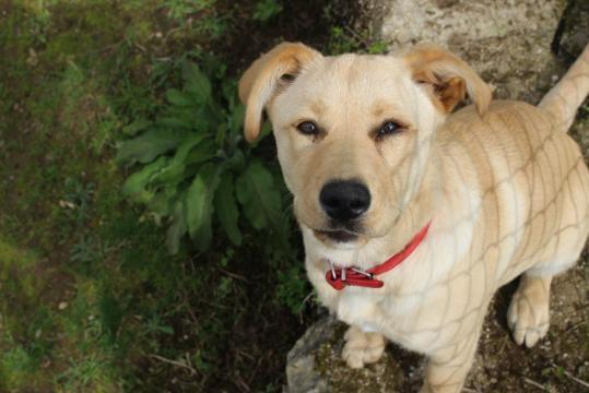 Sequelas na cadela apenas encontradas nos olhos, devido ao periodo excessivo dentro de água e ao choro.